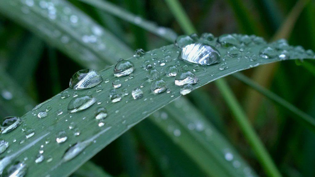 Вода в клетке: биологическая роль воды