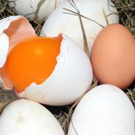 Фото гусиных яиц 5