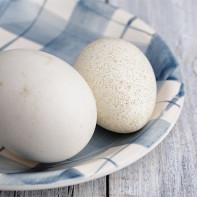 Фото гусиных яиц 4