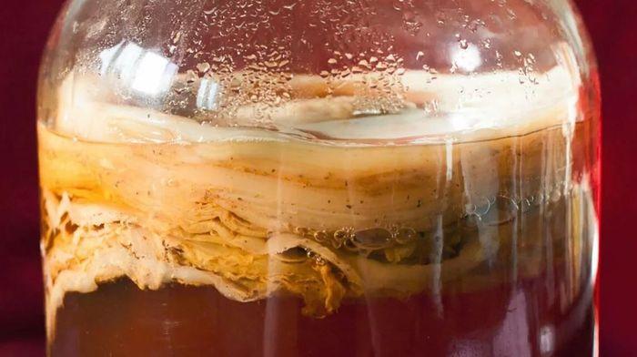 Польза чайного гриба для здоровья