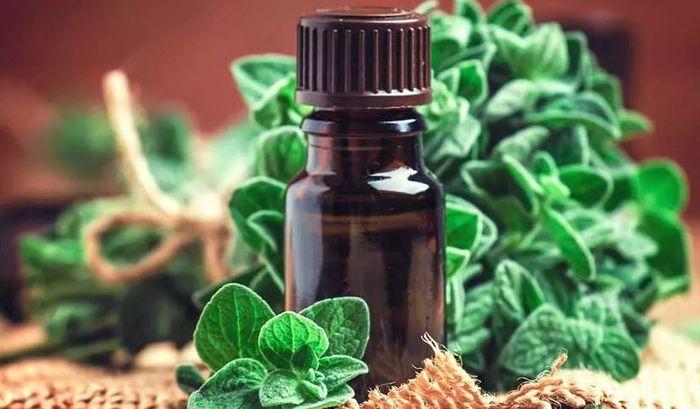Эфирное масло майорана: применение, польза, противопоказания