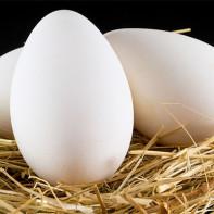 Фото гусиных яиц