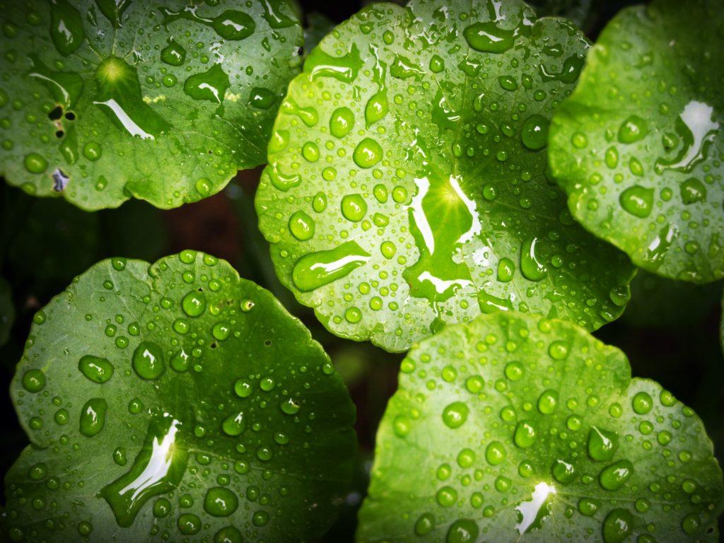 Вода для растений: роль воды в жизни растений и применение в быту