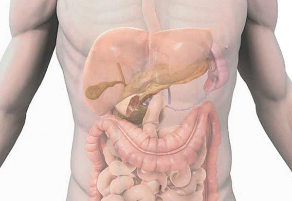 content digestive system econet ru