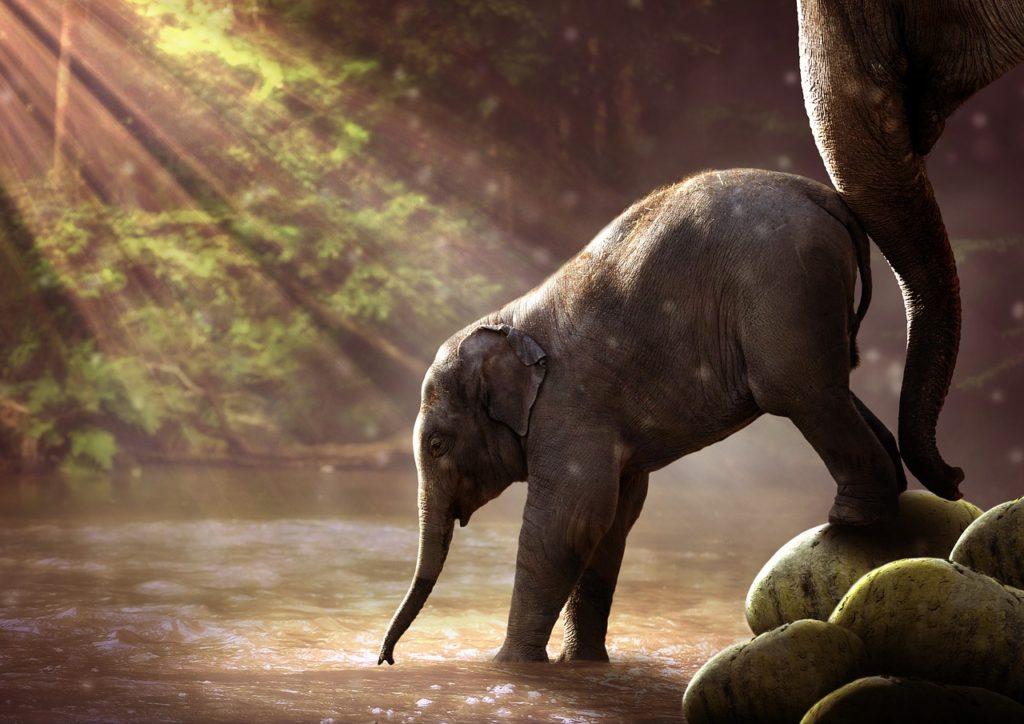 Функция воды в животном мире: чем вода является для животных, энергия и среда