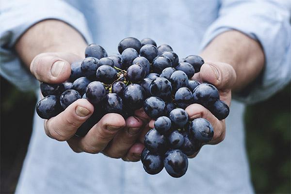 Как выбрать виноград для варенья