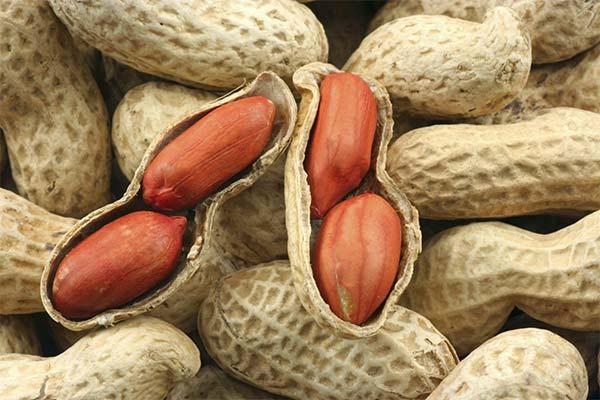 Польза арахиса при беременности