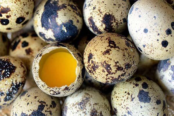 Польза перепелиных яиц при беременности