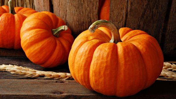 pumpkin polza 1