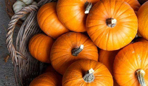 tild3265 3238 4532 b134 303834623464 pumpkin 3675534 1280
